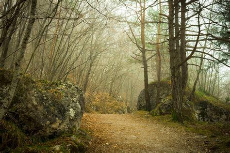 picture landscape wood tree nature fog autumn