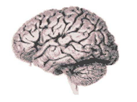 imagenes medicas gif gifs animados de cerebros animaciones de cerebros