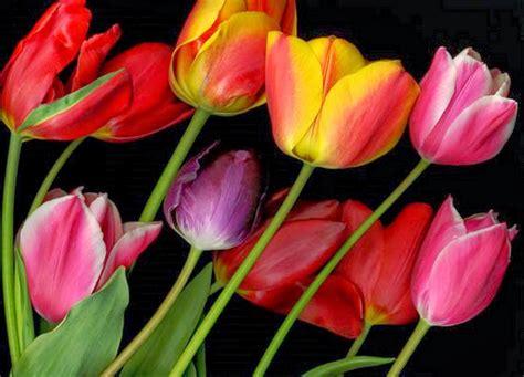 imagenes artisticas de flores cuadros modernos pinturas y dibujos cuadros de flores