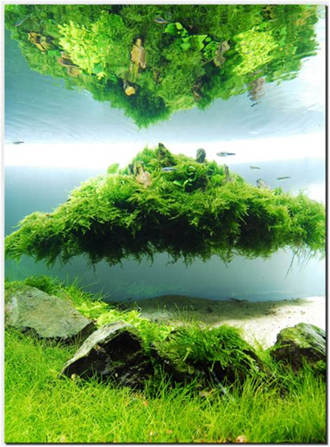 How To Aquascape by Aquascape Of The Month August 2010 Quot Beyond The Nature