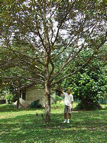Rumah Pohon Paw Patrol Big Tree pokok wiktionary