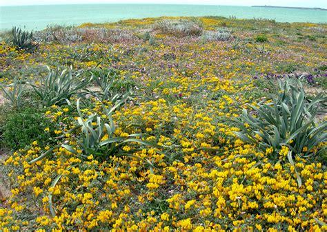 tappeto di fiori tappeto di fiori a san di sinis gaspar torriero
