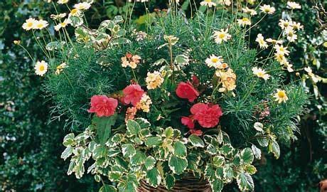 piante da terrazzo ricanti fiori da terrazzo estivi fiori da terrazzo estivi fiori