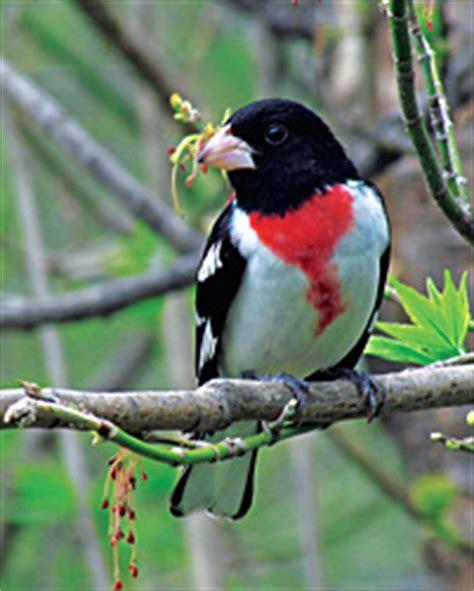 spring migration bird wisconsin
