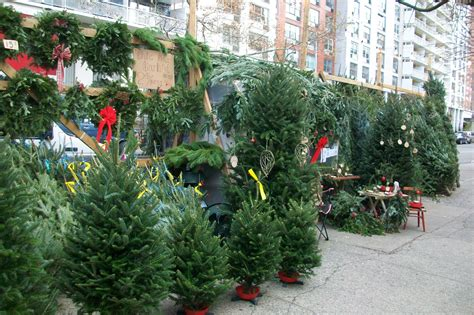 what stores sell christmas trees local ecologist 4 tree stories