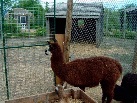 Www Zoo Section by Wisconsin Iowa Trip Photo Trip Report Theme Park Review