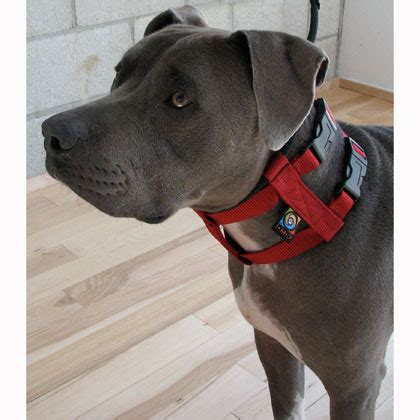 cesar millan collar cesar millan illusion collar leash system 1800petmeds