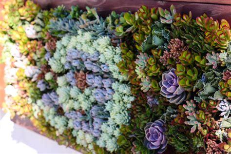 living walls truevert 174 vertical garden solutions san diego
