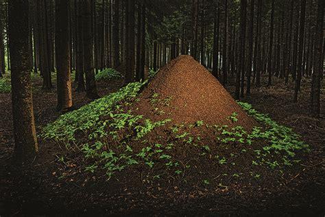 ingo arndt s amazing book reveals the wonderful world of animal architecture inhabitat green