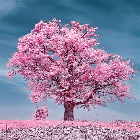 infrared color infrared colors by mugurelm on deviantart