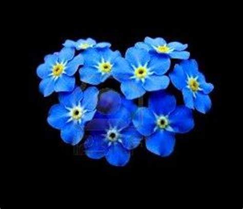 imagenes de flores no me olvides flor nunca me olvides