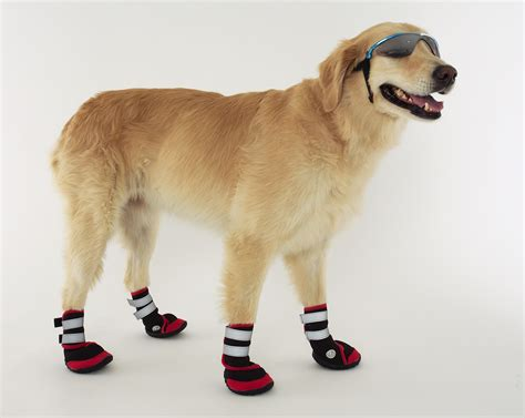 boat shoes for dogs dog apparel paw wear boots socks z other