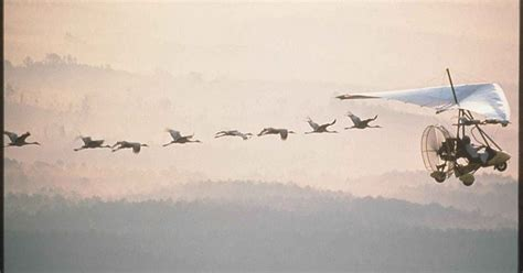 wild birds unlimited photo share whooping crane migration