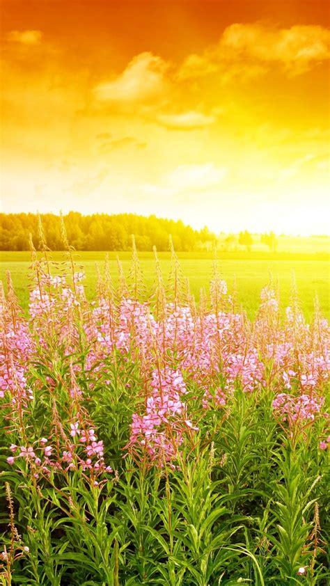 wallpaper sky  hd wallpaper sunset field flowers