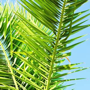 Winterharte Palmen Pflege 5797 by Zimmerpalmen Palmen Arten Und Pflege Als Zimmerpflanze
