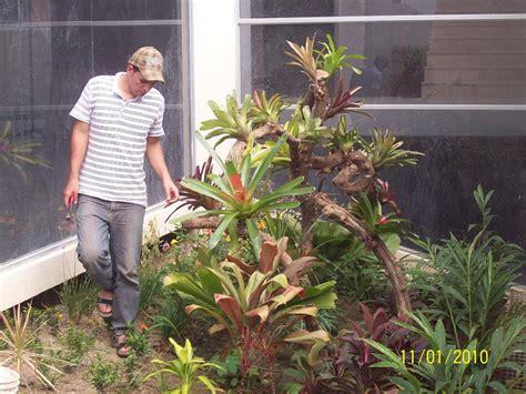 imagenes de jardines con troncos dise 241 os en troncos para decorar el jard 237 n con bromelias