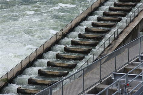 the fish ladder a the dalles dam fish ladders the dalles dam fish ladders 2 flickr