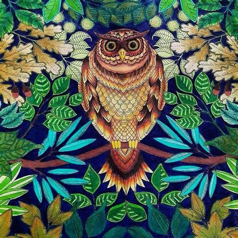 secret garden coloring book owl 17 best images about johanna basford owl on a branch