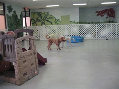 puppy play area indoor play areas search play areas