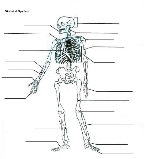 skeletal system diagram pdf diagrams of the skeletal system diagram site