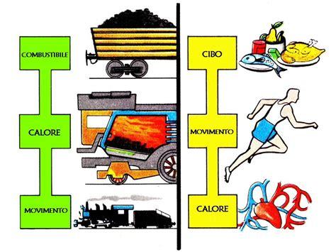energia degli alimenti siamo fatti cosi