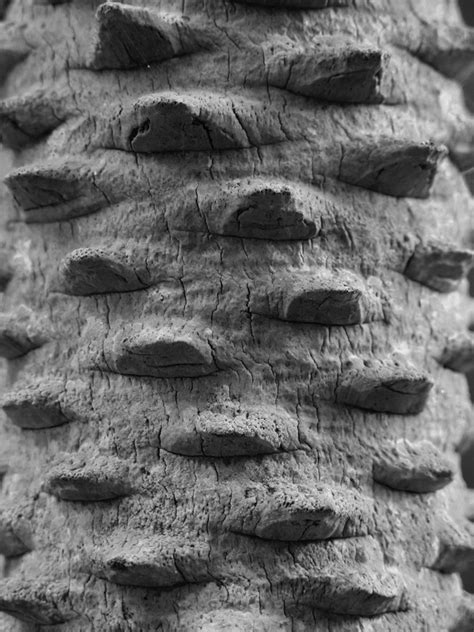 patterns in nature documentary patterns and shapes in the natural world photography and