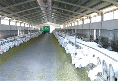 alimentazione ovini foraggiamento ed alimentazione attrezzature ovini e