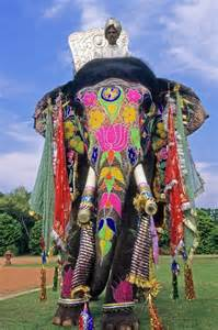 decorated indian elephant by michele burgess