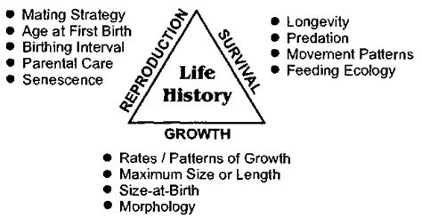 life history pattern and resource allocation cetacean life history marine mammals