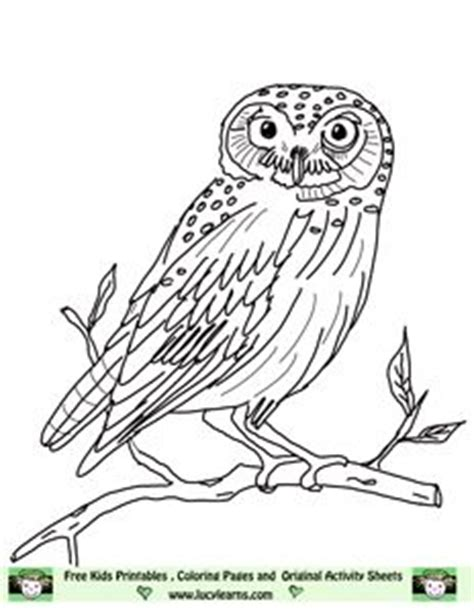 elf owl coloring page pin by bonnie foell on hooty hoots pinterest