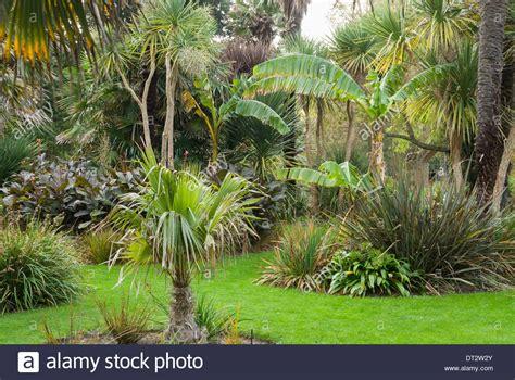 Palm Gardens by Palm Garden Ventnor Botanic Garden Isle Of Wight Uk Stock Photo Royalty Free Image 66446435