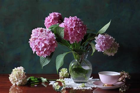 Bowl Vases Vase With Hortensia Flowers Photograph By Panga Natalie