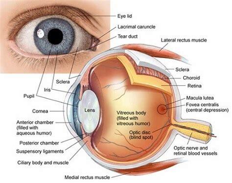diagram of cornea cornea raleigh opthalmology