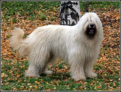 large haired breeds haired breeds large pet photos gallery ol20n50bon