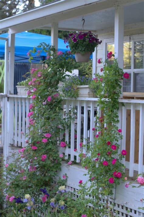 gardening on the porch pruning hometalk fall pruning of climbing roses