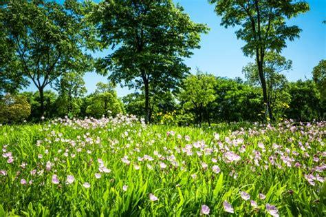 foto di fiori da scaricare gratis fiori nel parco scaricare foto gratis