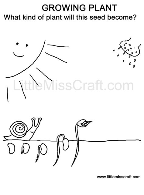 plant coloring pages for kindergarten crafts growing plant doodle coloring page