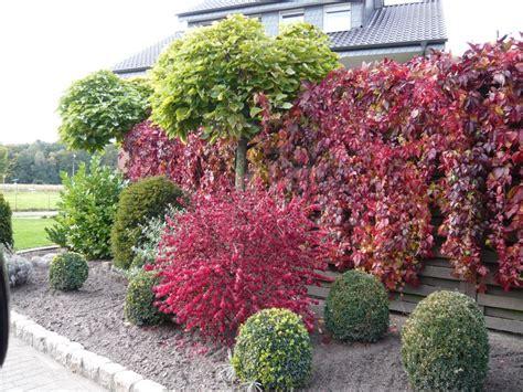 pflanzen pflegeleicht garten gartenpflanzen mit toller herbstf 228 rbung in leuchtendem rot