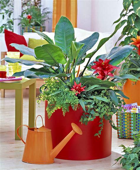 Plantes D Int 233 Rieur Les Secrets Pour Les Soigner Tout Au