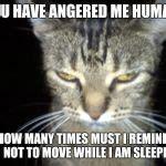 Angry Cat Meme Generator - angry tabby cat meme generator imgflip