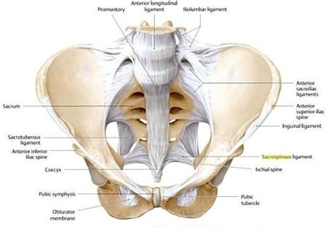 picture of women pelvic area sports injury and performance simple practical advice