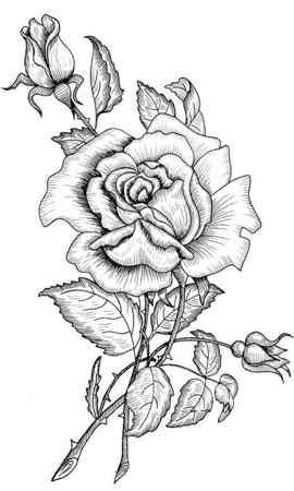 imagenes para dibujar y bordar dibujos de flores para bordar a mano