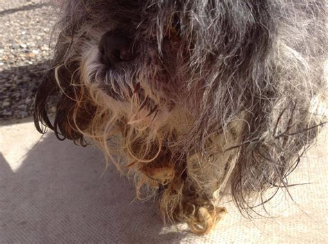Matted Hair Remedy by Severely Matted Transformed After Haircut Storytrender