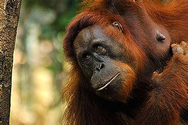 Borneo Vid resor med natur och foto p 229 borneo latitude travel