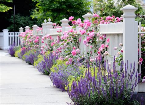 edging and border plants in landscaping