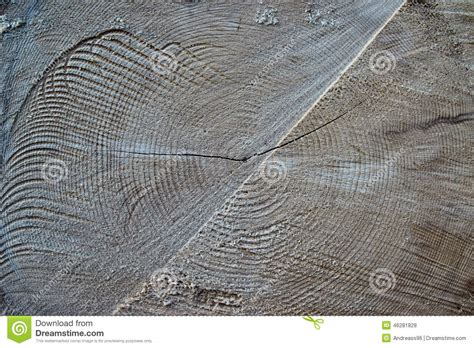 Cutting A Tree In Sections by Tree Section Texture Stock Photo Image 46281828