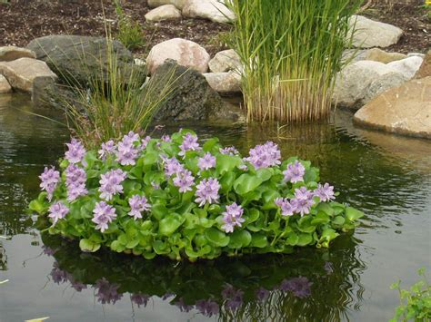 Floating Pond Planter by Floating Flora Hyacinth Island Water Garden Plants