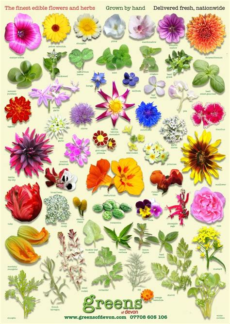 Garden Flower Identification Beautiful All New Poster From Greens Of Edible Flower Identifier Free With Every Order