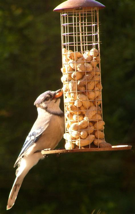 peanut bird feeders food seed homemade