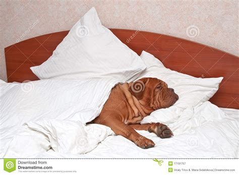 what are the most comfortable sheets to sleep on comfortable sleeping royalty free stock photography